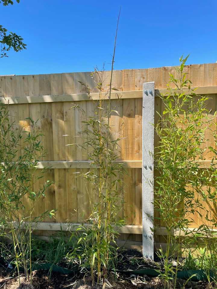 Fast Bamboo Growth Week 5