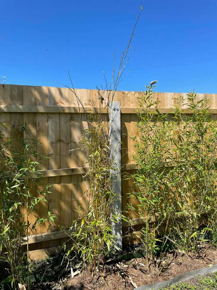 Fast Bamboo Growth Week 6