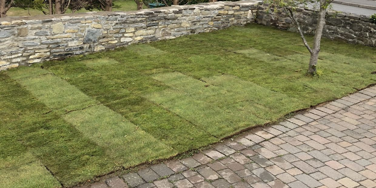 How To Lay Turf Step By Step